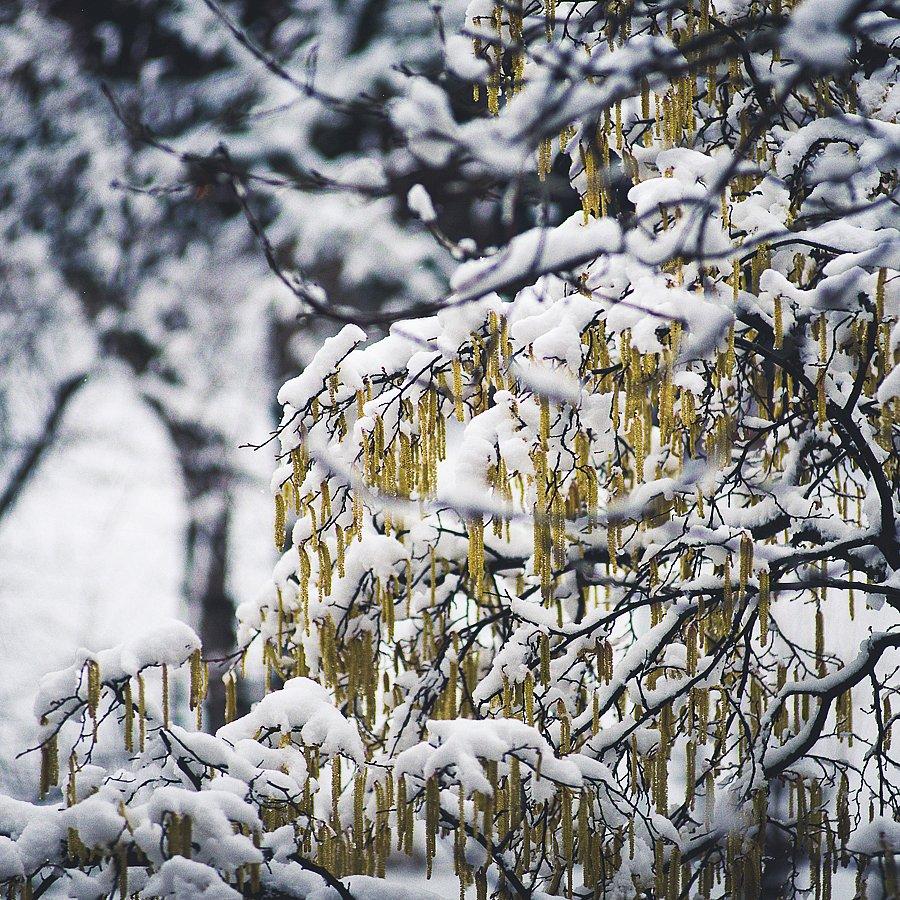 7560-Winter.jpg
