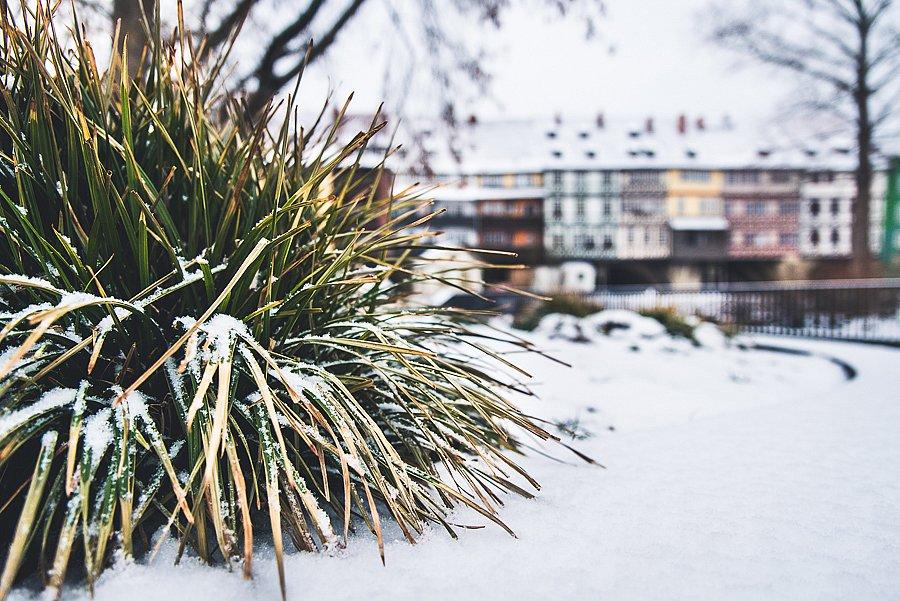 8291-Winter.jpg