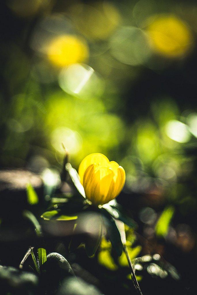 5137-Blume.jpg
