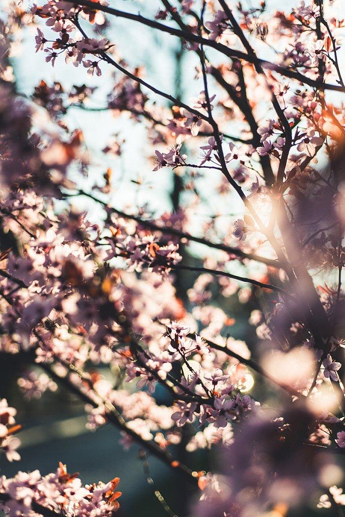 5496-Blume.jpg