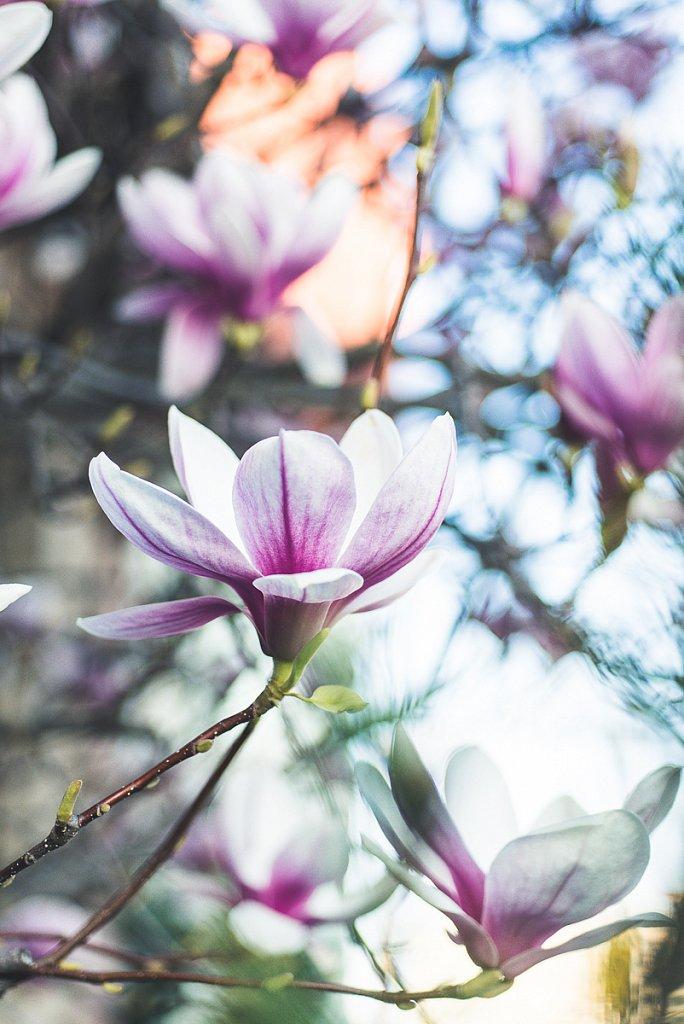 5501-Blume.jpg