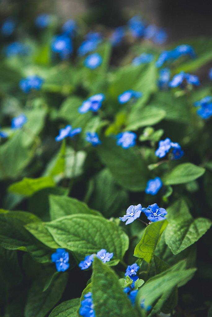 5880-Blume.jpg